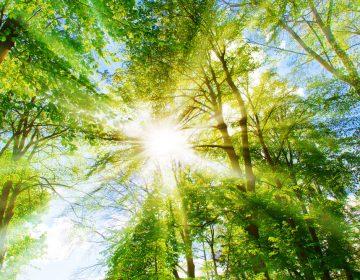 Objetivos do Desenvolvimento Sustentável: a importância de uma agenda global para o futuro que queremos
